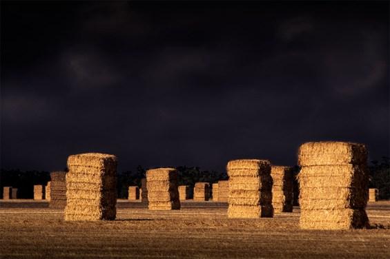 hay-paddock-wimmera-overcast-victoria