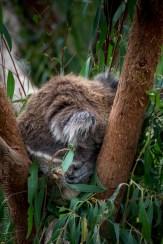 healesville-sanctuary-animals-birds-australia-4661