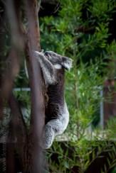 healesville-sanctuary-animals-birds-australia-4667