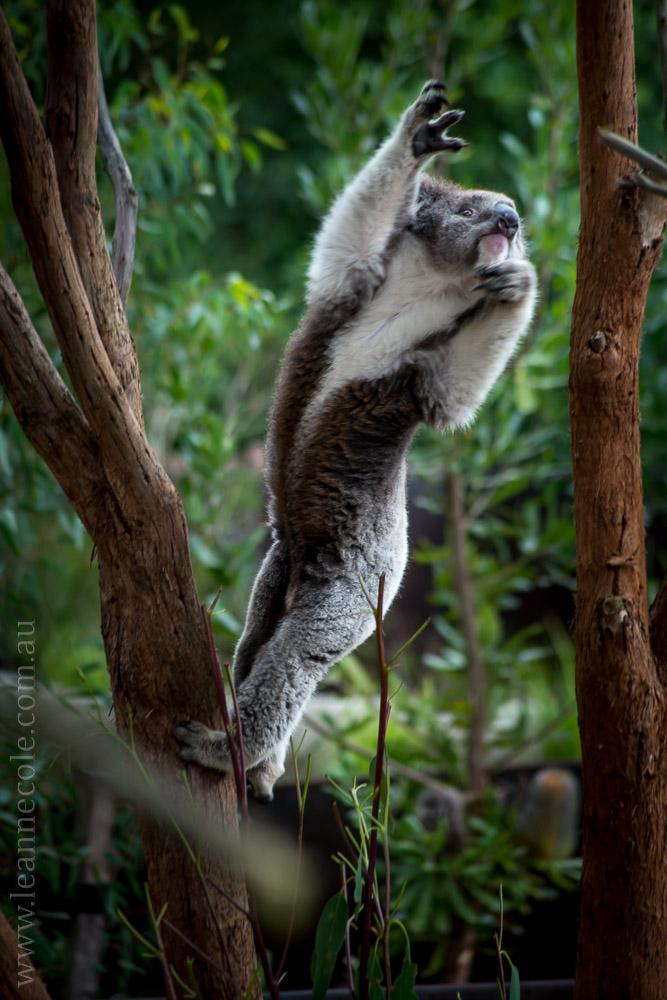 healesville-sanctuary-animals-birds-australia-4715