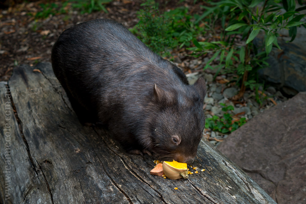 healesville-sanctuary-animals-birds-australia-4896
