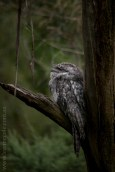healesville-sanctuary-animals-birds-australia-5016