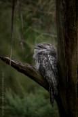 healesville-sanctuary-animals-birds-australia-5016