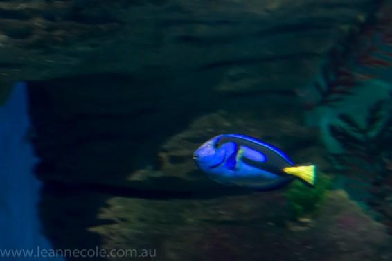 melbourne-aquarium-fish-turtles-penguins-110