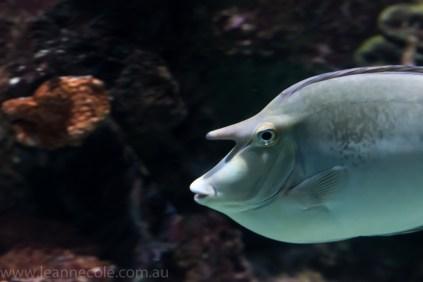 melbourne-aquarium-fish-turtles-penguins-117