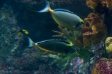 melbourne-aquarium-fish-turtles-penguins-118