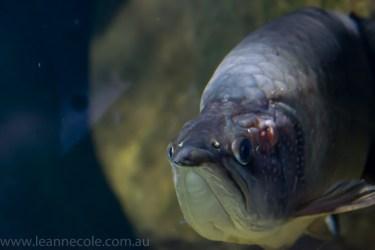 melbourne-aquarium-fish-turtles-penguins-125