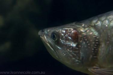 melbourne-aquarium-fish-turtles-penguins-126