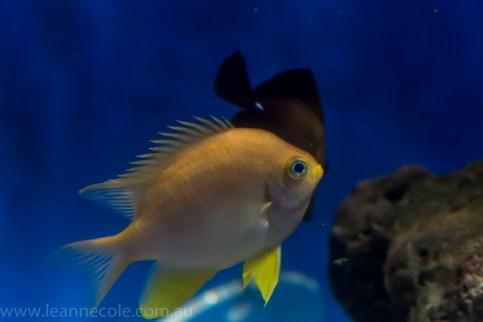 melbourne-aquarium-fish-turtles-penguins-129