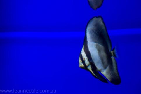 melbourne-aquarium-fish-turtles-penguins-132