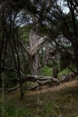 phillip-island-churchillisland-walk-victoria-6616