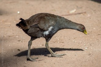 phillip-island-wildlife-park-5522