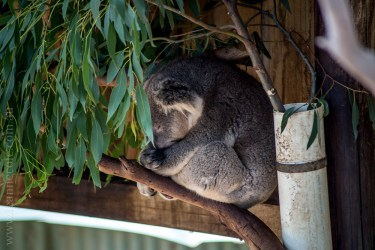 phillip-island-wildlife-park-5543