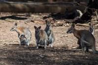 phillip-island-wildlife-park-5565