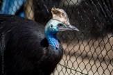 phillip-island-wildlife-park-5609