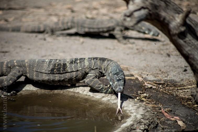 phillip-island-wildlife-park-5814