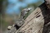 phillip-island-wildlife-park-5832