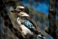 phillip-island-wildlife-park-5912