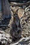 phillip-island-wildlife-park-6136