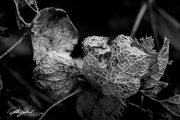 8/ Ritva's Art- Photography
