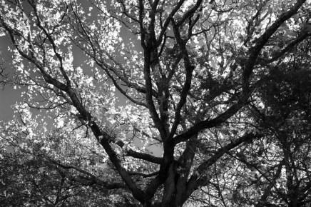 25/ rainy day reflections