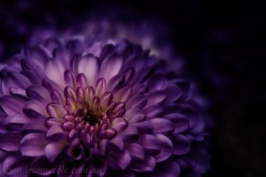 flower-garden-show-macro-edit-1043