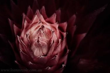 flower-garden-show-macro-edit-1044