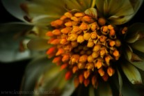 flower-garden-show-macro-edit-1049