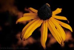 flower-garden-show-macro-edit-1051