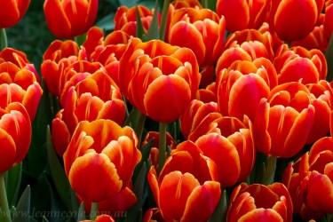 flower-garden-show-macro-lr-1048