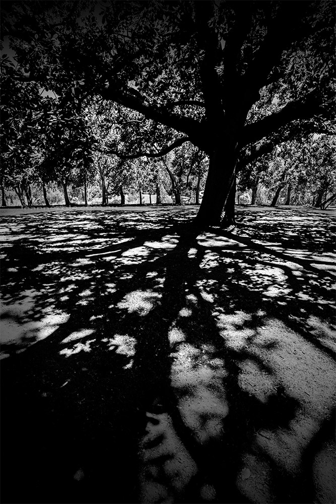 monochrome-madness-shadows-tree-heide