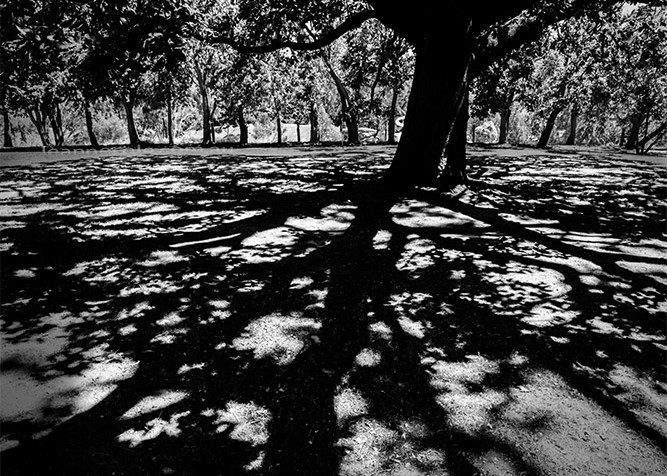monochrome-madness-shadows-tree-heide