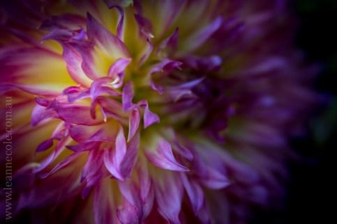 flowers-macro-mifgs-lensbaby-velvet56-9850