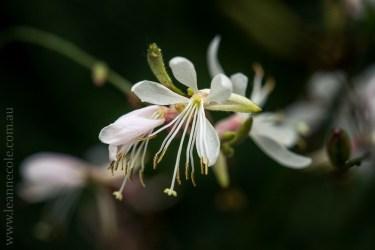 flowers-macro-mifgs-melbourne-9698