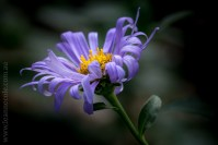flowers-macro-mifgs-melbourne-9701