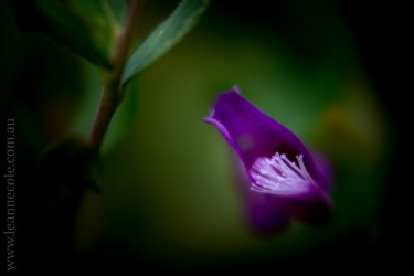 my-garden-macro-morning-1394