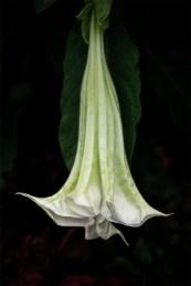alowyn-gardens-samyang100mm-macro-3160