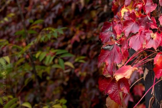 alowyn-gardens-winter-yarra-glen-3379