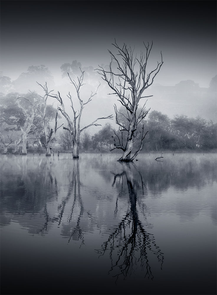 banyuleflats-fog-morning-winter-monochrome