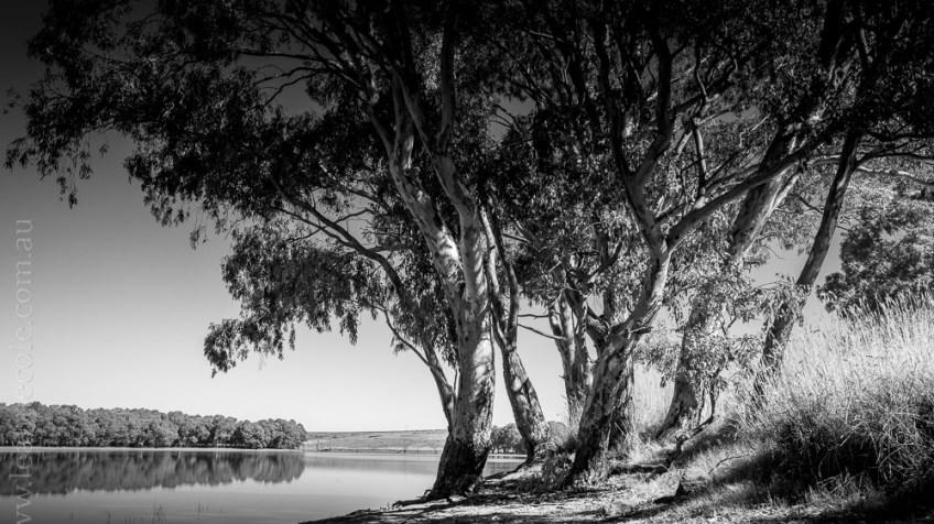 cairn-curran-reservoir-trees-0329