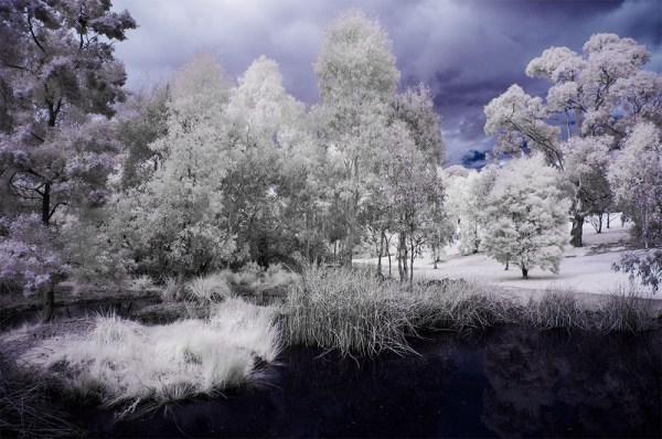 pond-binnak-park-colours-infrared