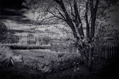 alowyn-gardens-infrared-tree-blossoms