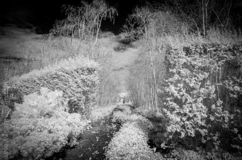 alowyn-gardens-infrared-yarraglen-22851