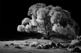 bayoffires-tree-infrared-tasmania-monochrome