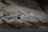 tasmania-trip-wineglassbay-boat-cruise-7565