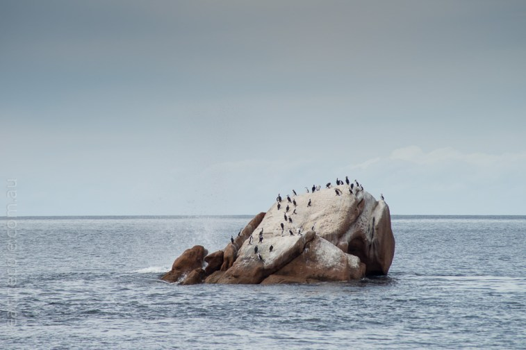 tasmania-trip-wineglassbay-boat-cruise-7791