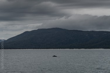 tasmania-trip-wineglassbay-boat-cruise-8095