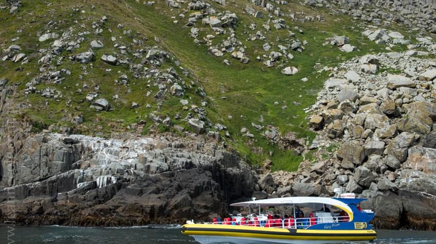 tasmanisland-cruise-pennicott-tasmania-cliffs-9646