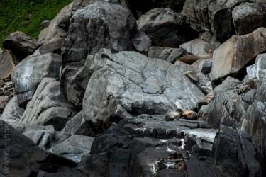 tasmanisland-cruise-pennicott-tasmania-cliffs-9652