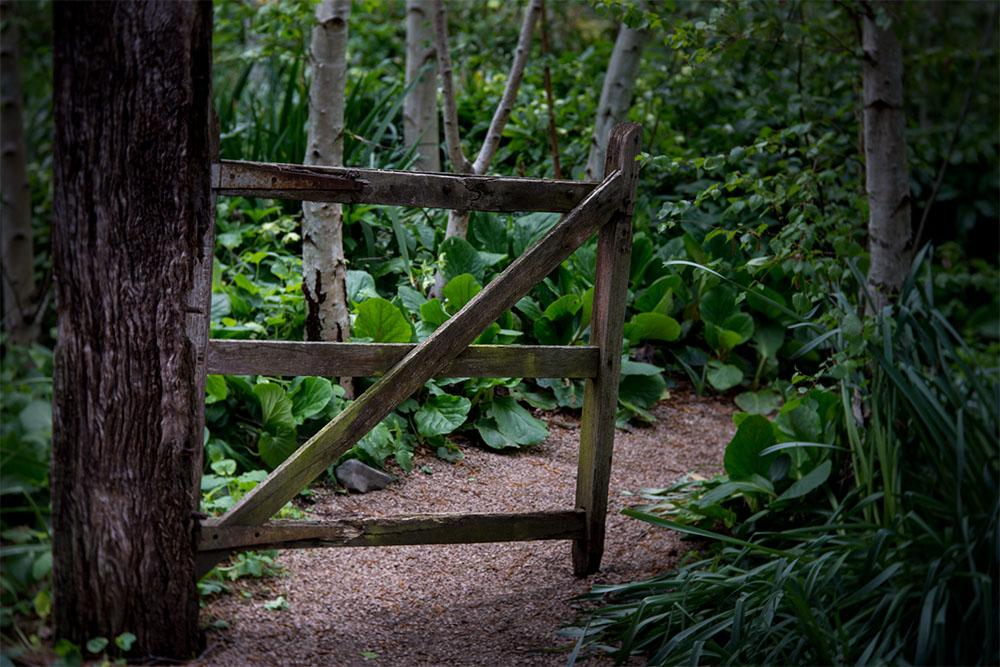 alowyn-gardens-lensbaby-velvet-85-1167